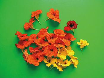 WORLD_OF_SALAD_FLOWERS_web